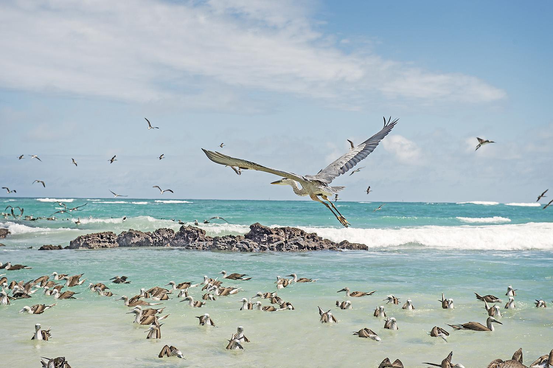 galapagous_islands_2015_04