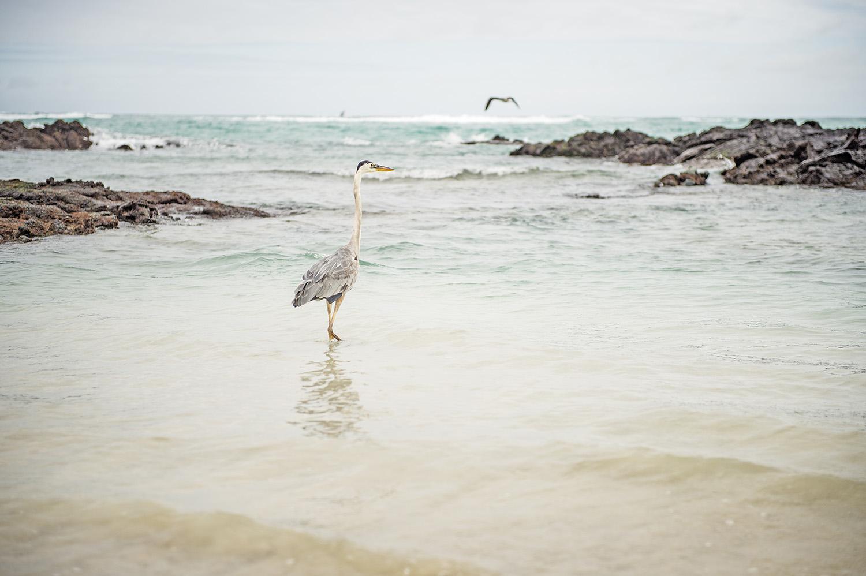 galapagous_islands_2015_05