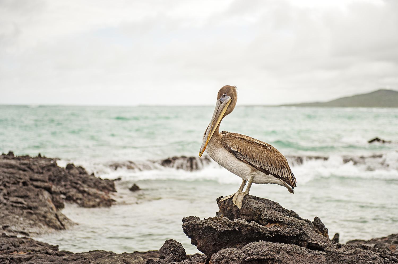 galapagous_islands_2015_18