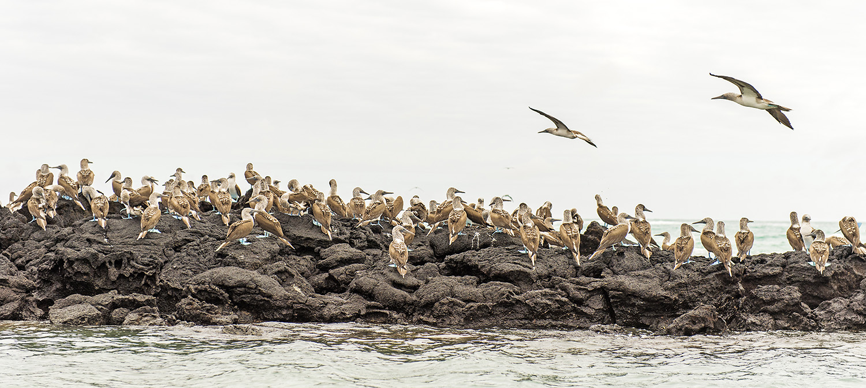 galapagous_islands_2015_19